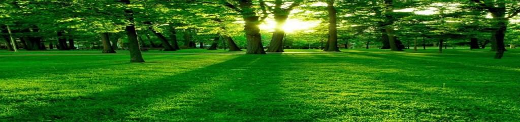 Billede af skov